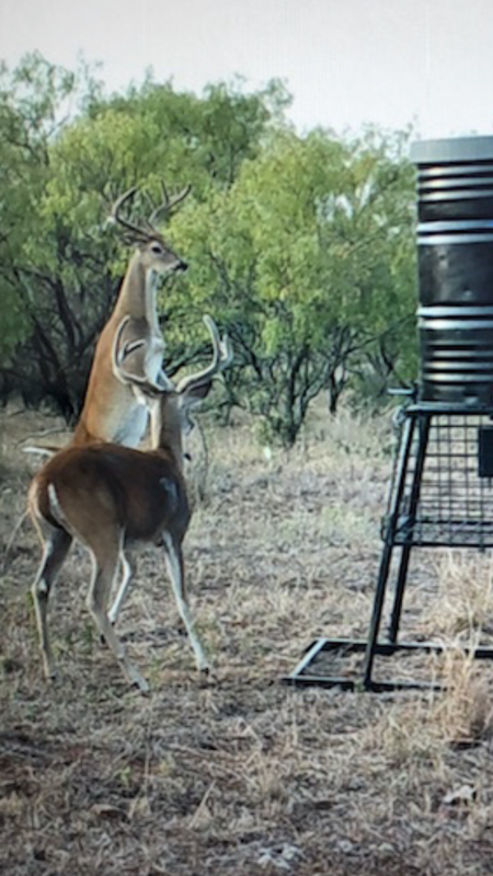 Management Buck and Doe Hunt for Parent - Child or Couples. Lodging included.