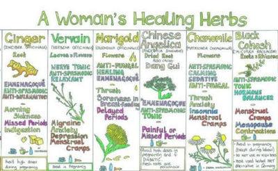 A womans healing herbs Chart