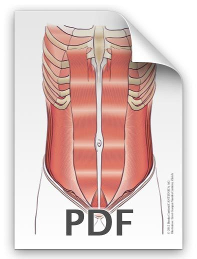 PDF: Bauchmuskeln, Pyramidalis Frau