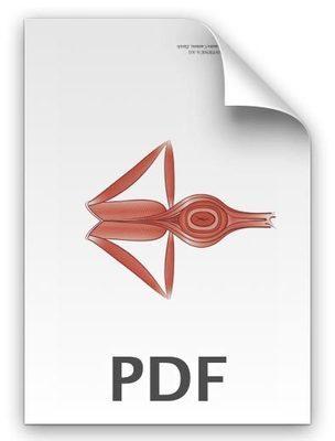 PDF: Äußere Beckenbodenschicht Mann