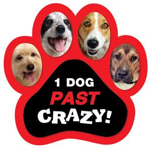 1 Dog Past Crazy Magnet
