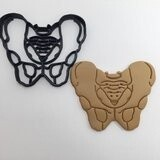 Anatomical Pelvis Cookie Cutter
