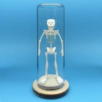 Tiny Human Skeleton Deluxe Mini 3D Kit