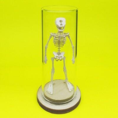 Tiny Cyclops Skeleton Deluxe Mini 3D Kit