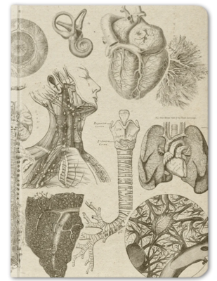 Human Anatomy Notebook