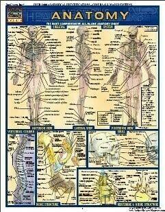 Anatomical Chart with IMSS Logo