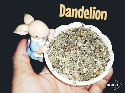 Dried Dandelion