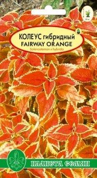 Колеус гибридный Fairwey Orange F1