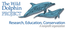 Wild Dolphin Project