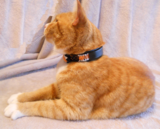 PawTrax Halo GPS Cat collar