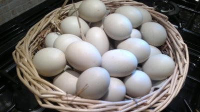 Hatching Eggs x 6 COLLECION ONLY
