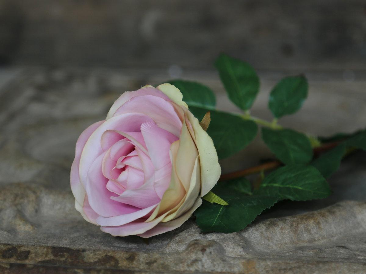 Dekorationsblomster - Rose, rosa. H71Ø10 cm