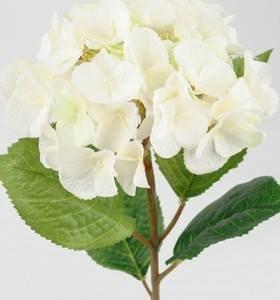 Dekorationsblomster - Hvid hotensia. H45 cm