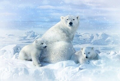 Polar Bear Family - Hoffman Fabrics Digital PANEL