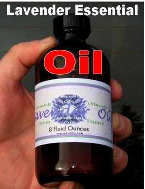 Lavender Oil Bulk, 8oz glass bottle, Pure Essential Oil, Priced per bottles