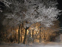 Crystal Trees (Saylorsburg, PA), 16