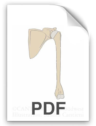 PDF: Oberarmkugel