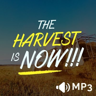 The Harvest is NOW!!!